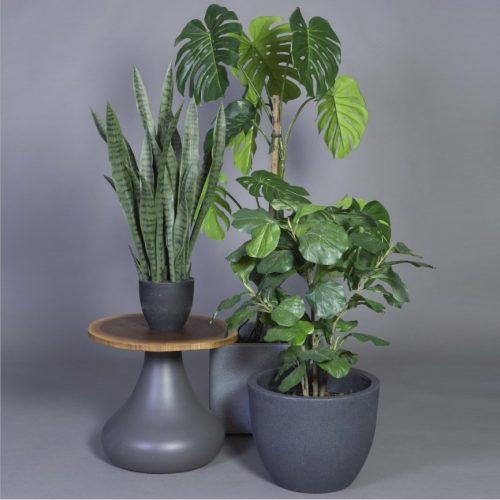 Götessons_Plantsműnövény kollekció_ikon